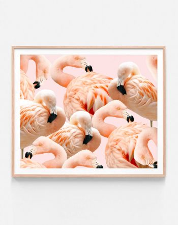 Shop Flamingo Blush tropical flamingo modern boho photography digital Art Print by artist Uma Gokhale 83 Oranges unique artist-designed wall art & home décor