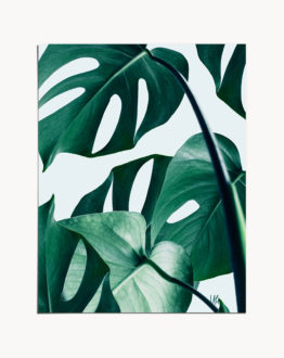 Shop the Monstera nature modern boho botanical photography/digital art print signed by artist Uma Gokhale 83 Oranges