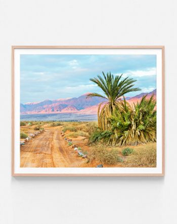 Shop Joshua Tree, Palm Nature Photography, California Travel Art Print by artist Uma Gokhale 83 Oranges unique artist-designed wall art & home decor